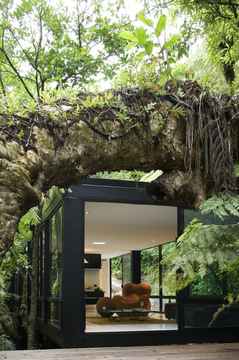 'Forest House' Hugged by Trees:  Chris Tate Architecture
